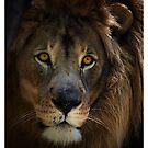 Lions Eye II by Dennis Stewart