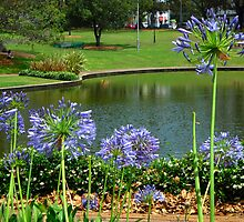 Agapanthus & Natural Dam by C J Lewis