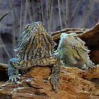 Two curious lizards by BFN1978