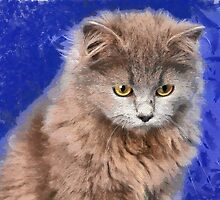 sad cat by bogfl
