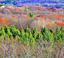 Lapham Peak Panorama by EBArt