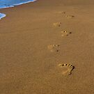 Footprints by Jillian Holmes