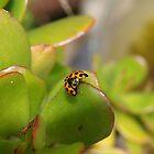 Lady Beetle by cjgaus