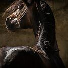 Spanish PRE Stallion by Sue Ratcliffe