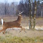 Buck on the Run 2 by Jim Cumming