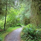 Forest Trail 2 : Olympic National Park by Gstudio