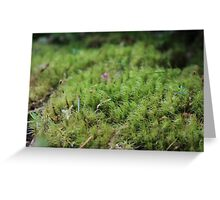 Small World : Olympic National Park Greeting Card