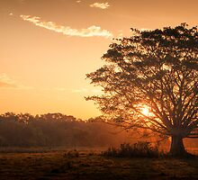Mullumbimby Sunset by Jai Honeybrook
