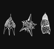Radiolaria by Boris Mordekovich