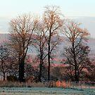 Winter Morning Light by Caroline Anderson