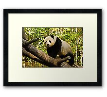 Panda! Framed Print