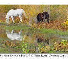 """Pine Nut Range wild horses, """"Luna"""" & """"Desert Rose"""" by Ellen  Holcomb"""