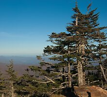 smoky mountains view from mount mitchell by Alexandr Grichenko