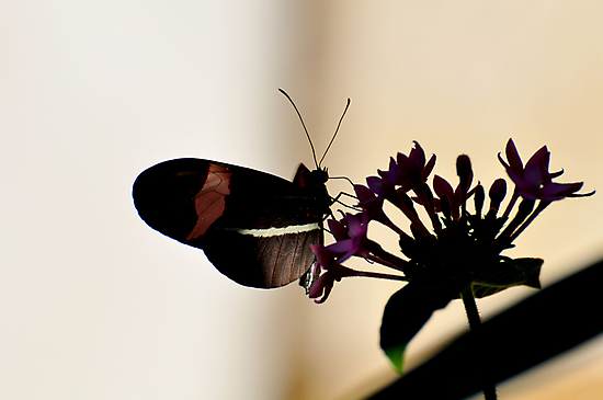 Butterfly by angelc1