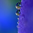 A Drop of Purple by Kathy Weaver