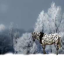 TIGER HORSE  by Randy & Kay Branham