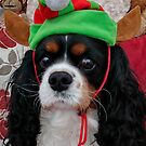 Charlie the Elf by AnnDixon