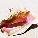 Conch Shell - Listen by Sharon Cummings