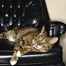 CAT ON A LEATHER CHAIR by monkeydesigns4u