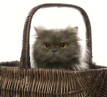 CAT IN A BASKET by monkeydesigns4u