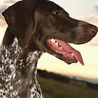 GERMAN SHORTHAIRED POINTER by monkeydesigns4u
