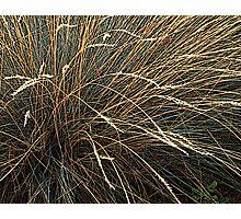 Garden grasses Photographic Print