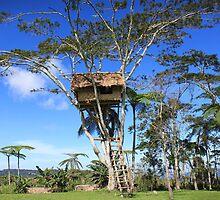 Tree House, Kokoda  by BenClarkImagery