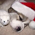 Santa's Little Helper by pics4me