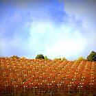Winery - Hanging Rock, Victoria, Australia - 2012 by Alison  Eno