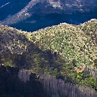 The edge of wilderness by Rhoufi