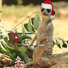 Merry Meerkat by Larry3
