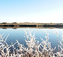 frosty twigs in snow against cold blue sky and river by morrbyte