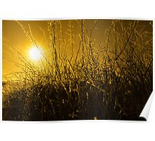 icy twigs and branches in snow against orange sunset Poster