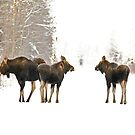 The Moose Family  by Chris  Gale