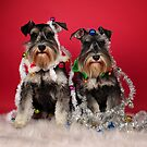 Christmas Pups by Lover1969