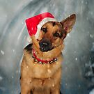 Christmas GSD by Lover1969
