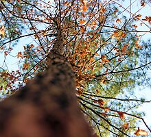 Always Look Up by aprilann
