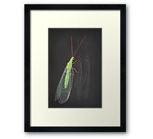 Common lacewing Framed Print