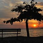 sunset tree by dinghysailor1