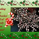 Sending You A Bucket Full of Candy Cane Kisses by Jane Neill-Hancock