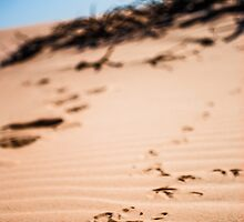 Desert Tracks by Candice84