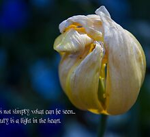 Yellow Tulip - Quotation by Kiarn