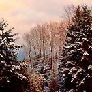 Snow in the Northwest by Elaine Bawden