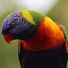 Rainbow Lorikeet, Close-up by JLOPhotography
