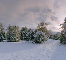 Winter is Coming by phototherapy318