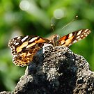 Butterfly between a rock and a green space by retroboho