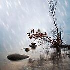 Zen by Joana Kruse