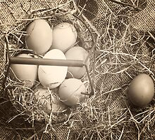 eggs by Joana Kruse