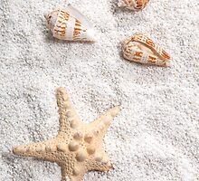 sea shells by Joana Kruse