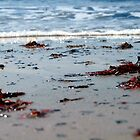Seaweed by juliweeeeee